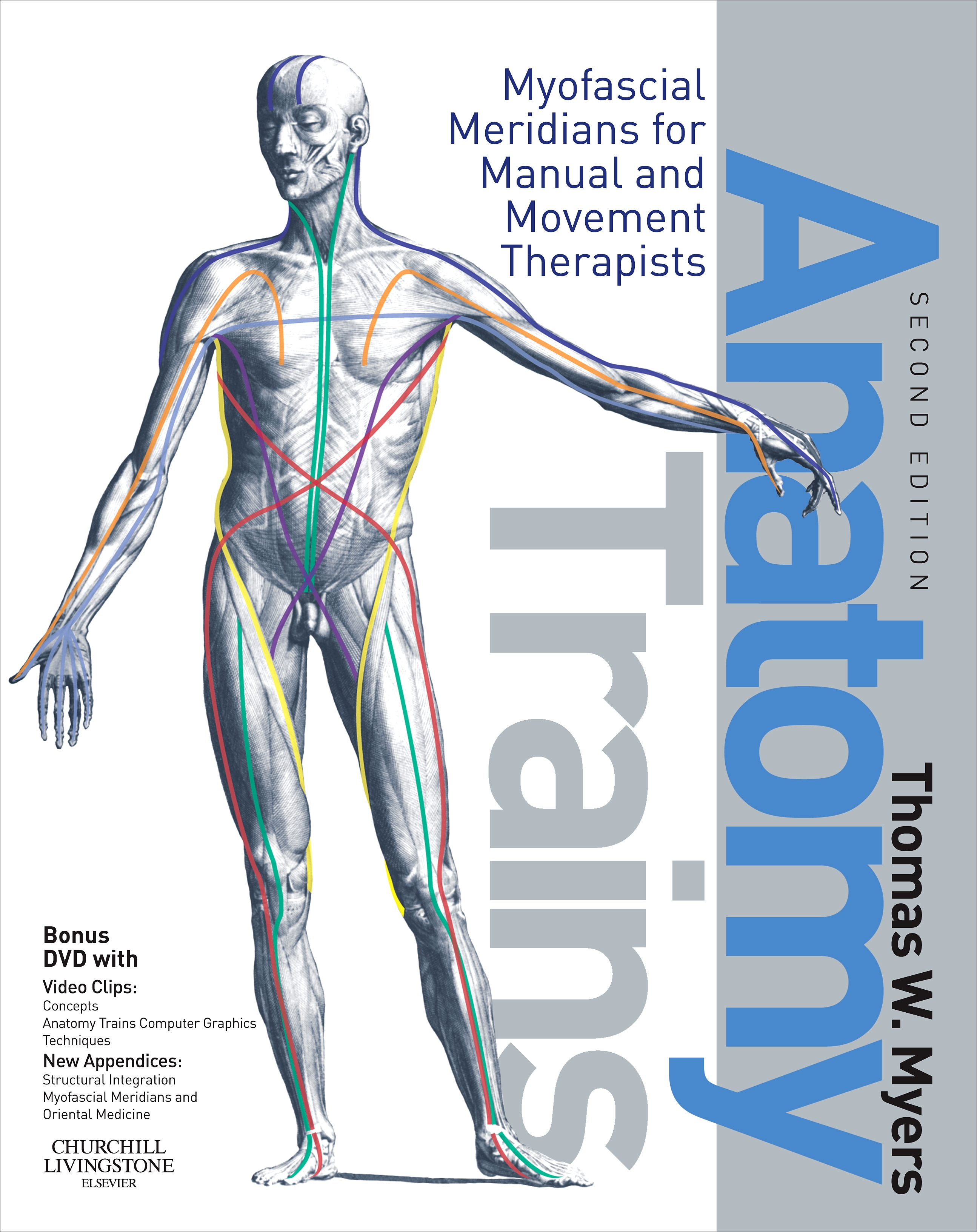 Sfma selective functional movement assessment recap miller dr anatomytrains 1betcityfo Images