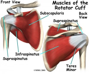 shoulder_rotator_cuff_anat02